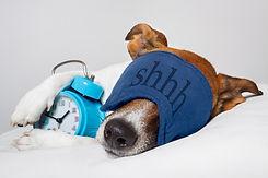 Dog sleeping with alarm clock and sleeping mask.jpg