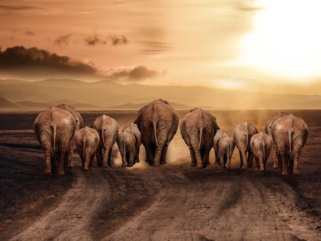 Eine Elefanten Geschichte