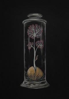 Cerebellum Seed / Beyincik Tohumu