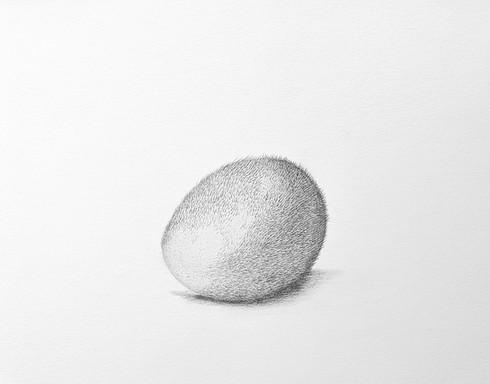 Hairy Egg / Kıllı Yumurta