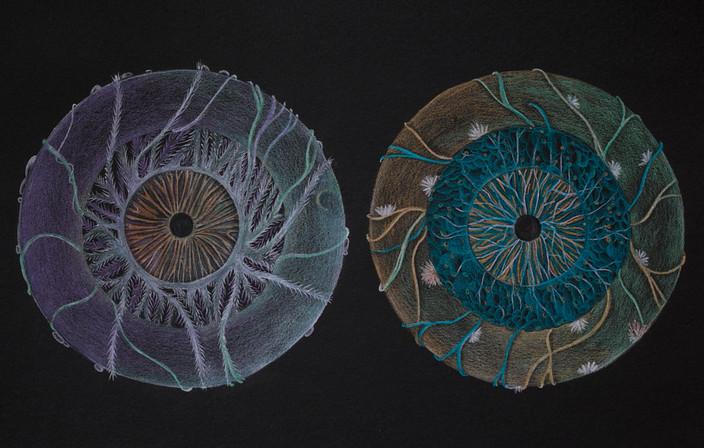 Arteries and Veins of Iris / Iris'in dalları ve damarları