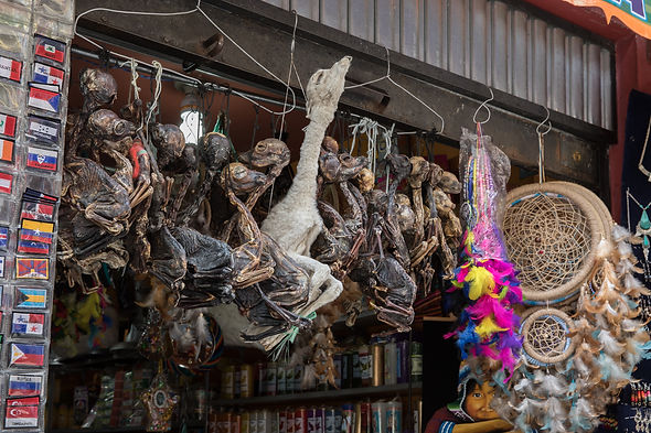 Dried LLama fetuses at the Witch Market in La Paz Bolivia
