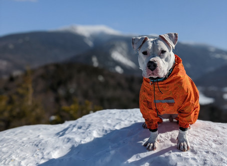 When NOT to Bring Your Dog on a Winter Hike