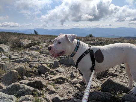 A Gorgeous Weekday Hike Up Mt. Moosilauke