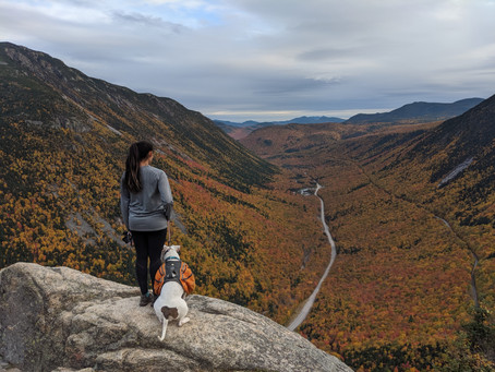 Mt. Willard: A Short Hike with a Sweet View