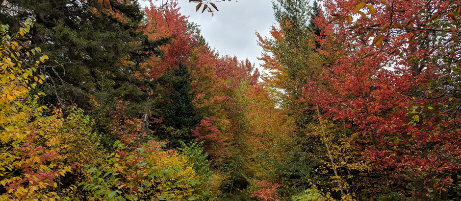 A Leaf Peeper's Paradise on Mt. Cabot
