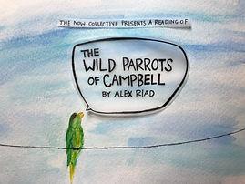 parrots reading