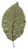 96(1).png