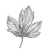 HOJA PNG .png