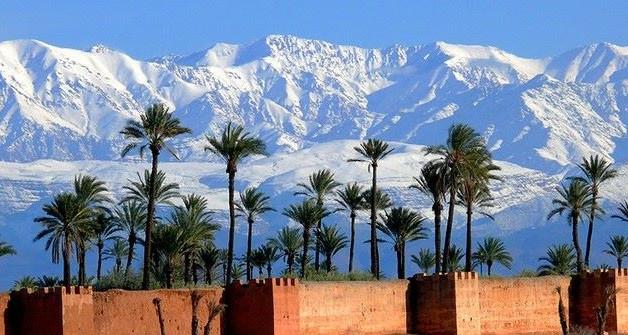 PALM TREES & ATLAS MOUNTAIN