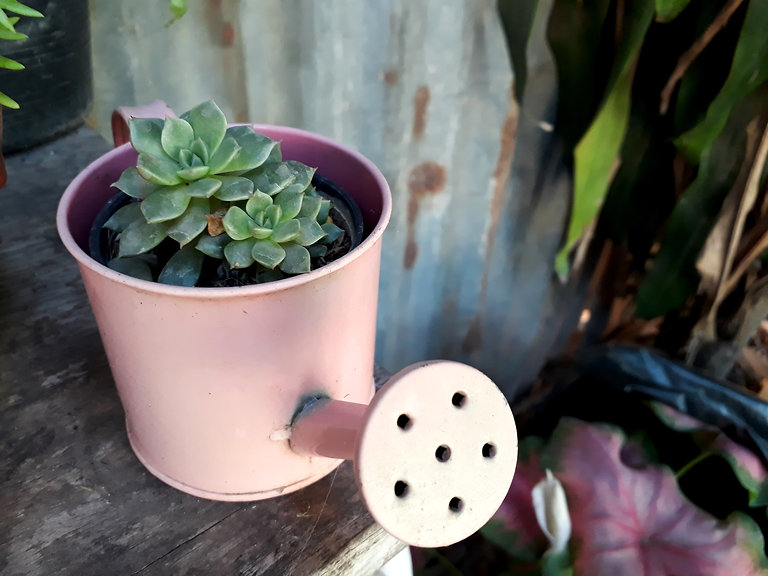Succulent cactus in pot decorated with r