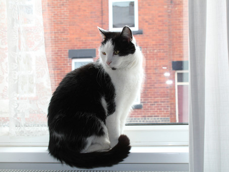 Help The Sheffield Cats Shelter CREATE THEIR MASCOT
