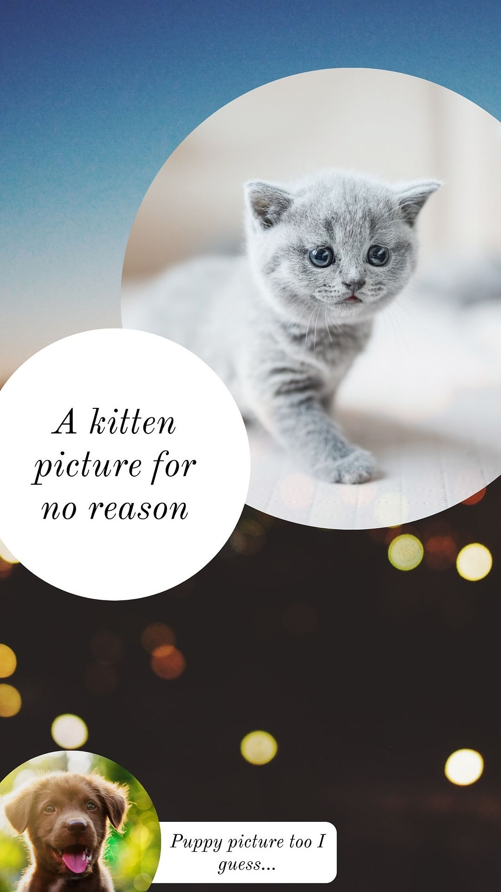Silly infographic showing a kitten and a puppy