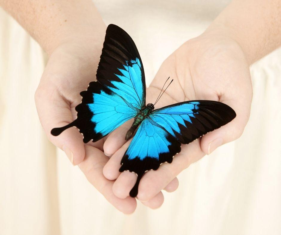 nurturing hands holding a blue butterfly