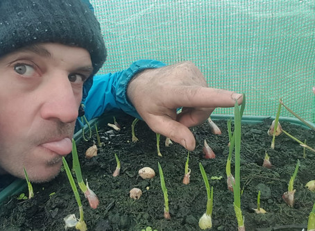 How to make summat outta nowt #17-plant your own garlic