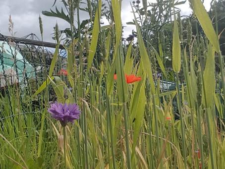 Wheat to Wild Flowers !
