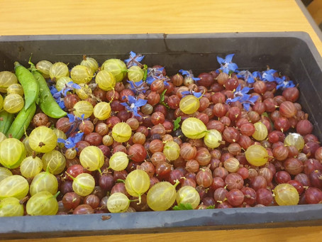 So here it is the humble gooseberry