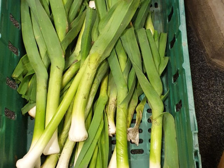 Launching our green food bank with lovely leeks