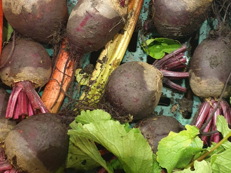 Brilliant Beetroot