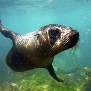 Swim with the seals