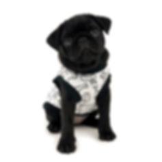 Doggy_3.jpg