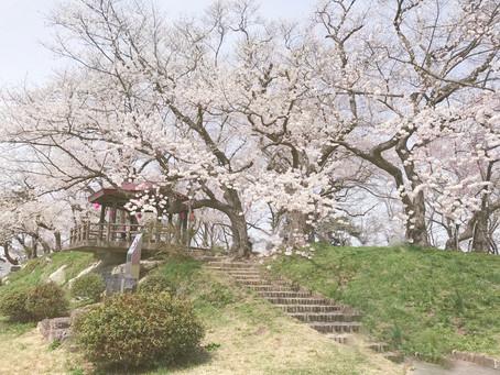 日本海外仙台、雪景櫻花季開跑囉!!
