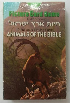 רביעיות חיות ארץ ישראל