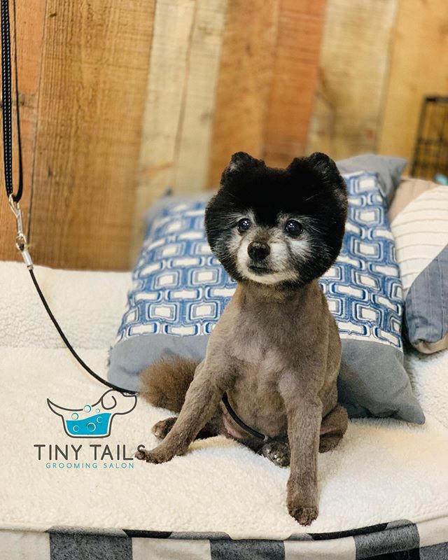 I groomed a raccoon today 😂 #TinyTails