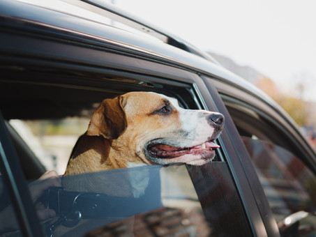 HOND IN EEN HETE AUTO: WANNEER MAG JE DE AUTORUIT INSLAAN?