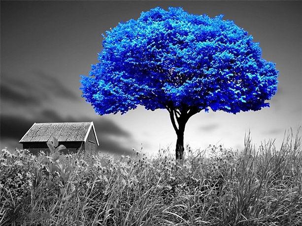 blue-tree.jpg
