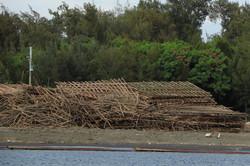 海邊被集中安置的蚵架