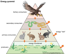 Why we keep getting it wrong when it comes to sustainable food systems and the reptile trade