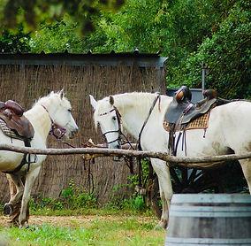 cheval-camargue-compagnon-du-gardian.jpg