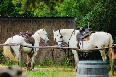 chevaux-camargue.jpg