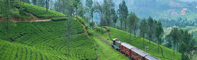 sri lanka - tea trails36.png