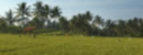 Alila Ubud - The Alila Experience - Padd