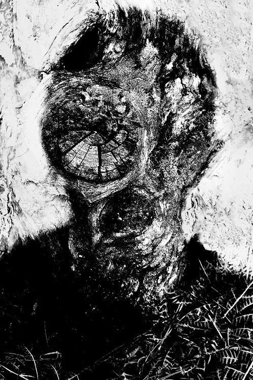 Les hetres humains I, Jerzy Piwowarczyk, 2013