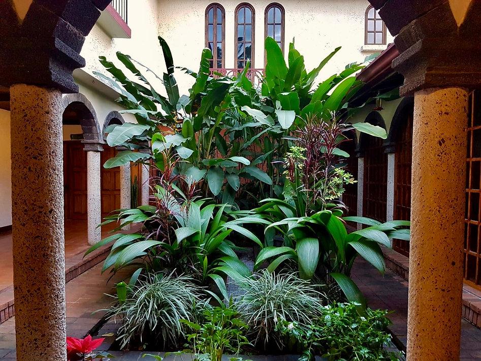 jardín ashram.jpg