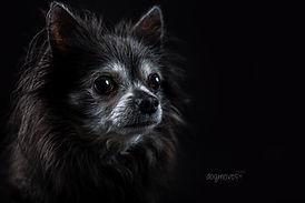 Tierfotografie, Mannheim, Hunde, Katzen, Fotografie, HUndefoto, Foto mit Hund, Studio, Katzenfoto,