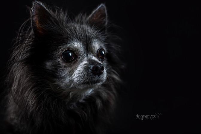 Balou Seniordog
