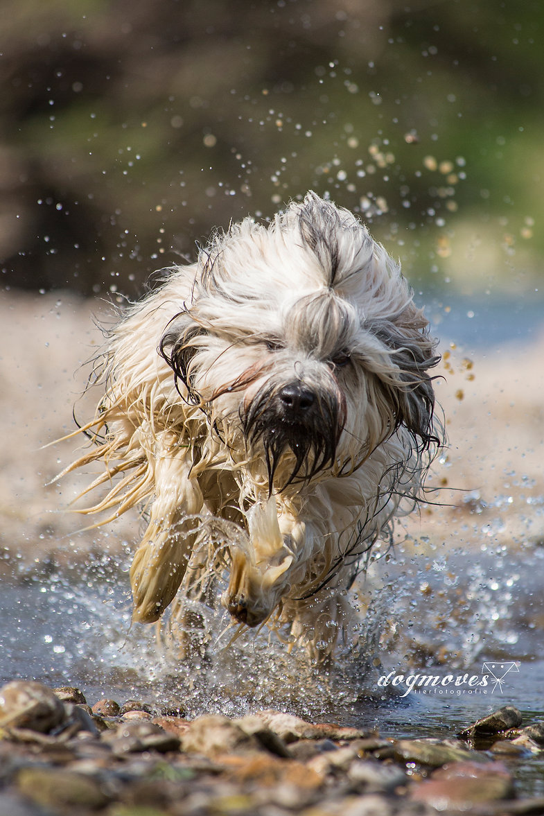 Hunde Wasser Shooting Mannheim Aktion