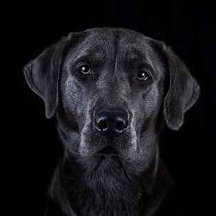 Hunde Fotografie Studio