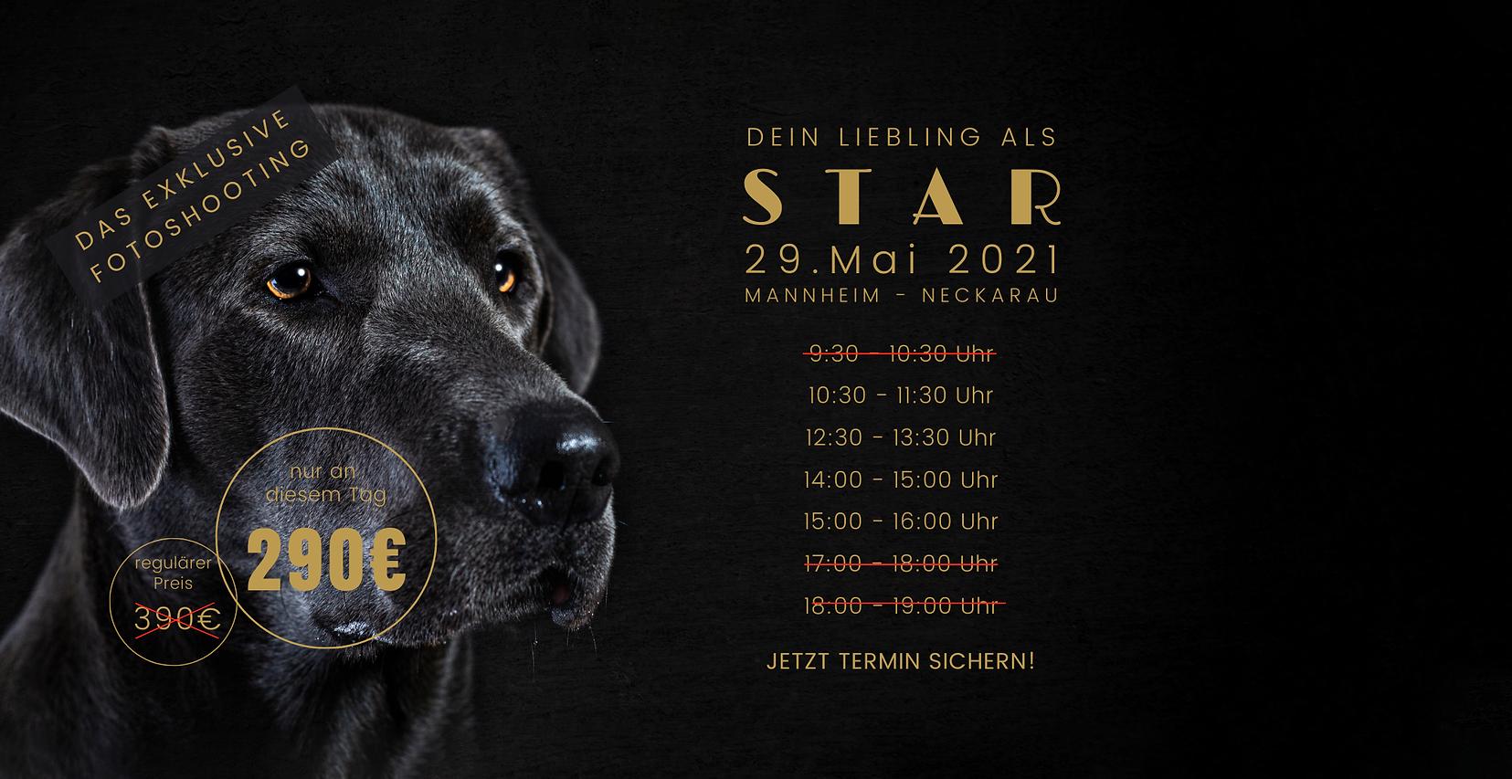 Event Hunde Fotografie Mannheim