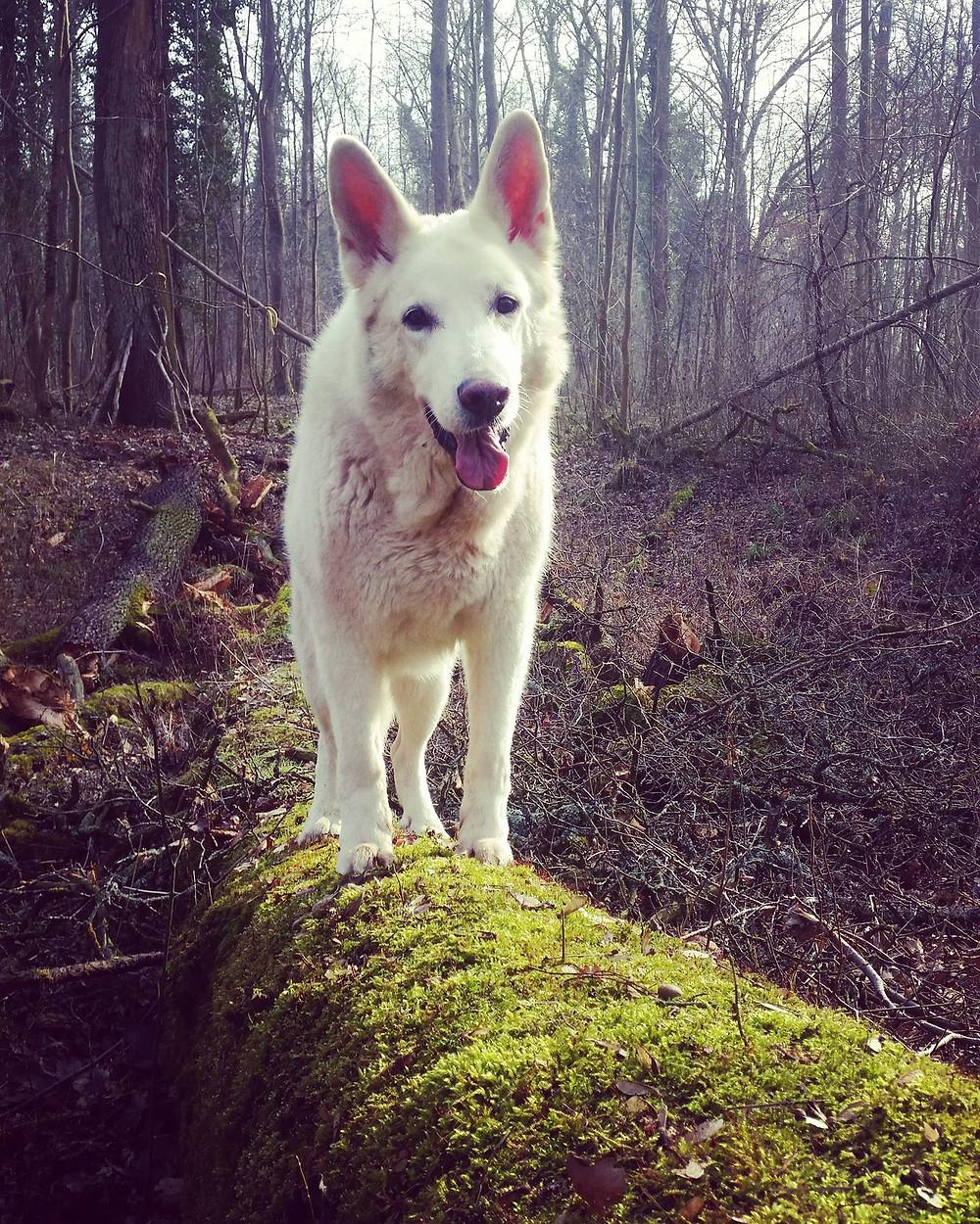 Hunde Hundefotografie Tierfotografie dogmoves Mannheim