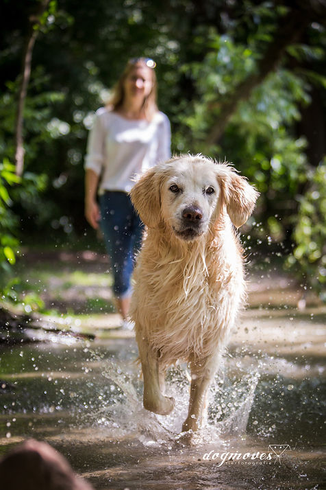 Hund Wasser Shooting Tierfotografie Mannheim