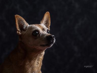 Rocco - Old but Gold - Erzähl mir deine Geschichte