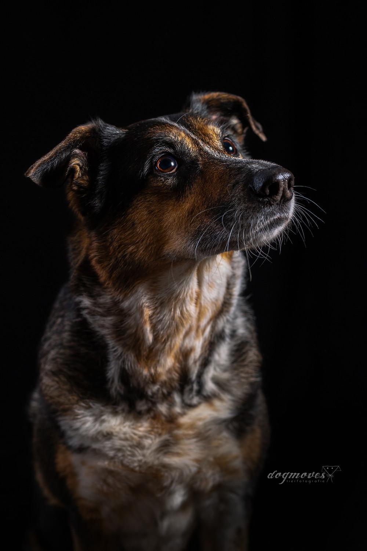 Hund Senior Shooting Mannheim