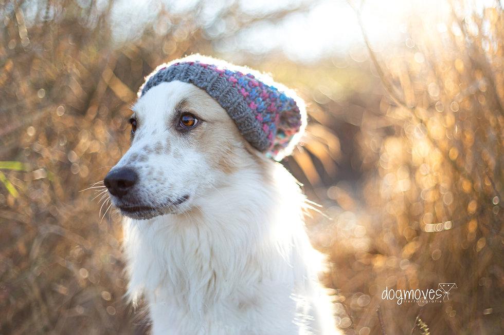 Winter Hund