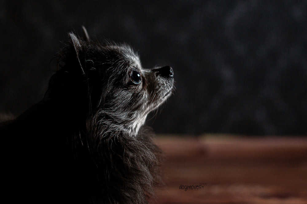 Hunde Urlaub Tierfotografie Mannheim