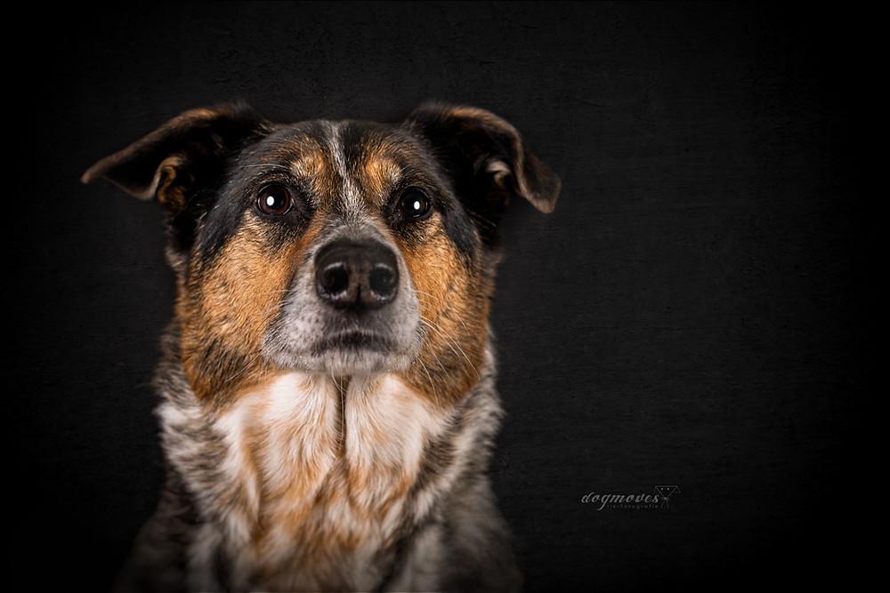 Hund Mischling Fotos mit Hund
